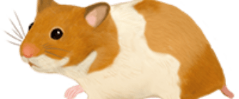 200_hamster